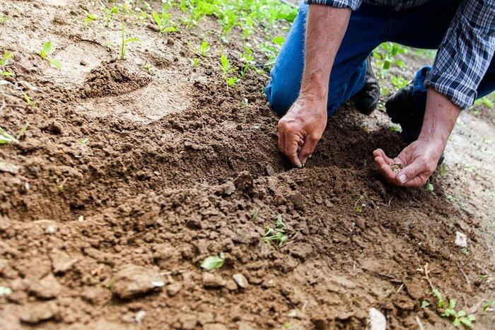 L'Australie va planter 1 milliard d'arbres contre le changement climatique, et le monde doit suivre