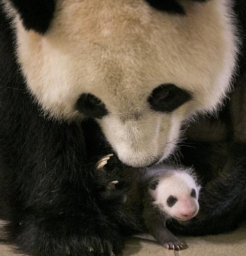 Bonjour....   avec Mini Yuan Zi