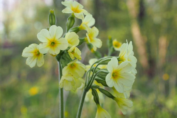 fleurs printanières (2)