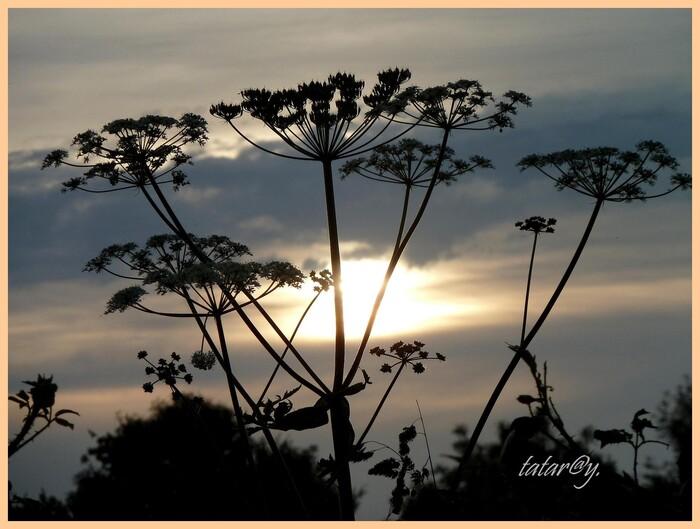 Grand soleil. 3)