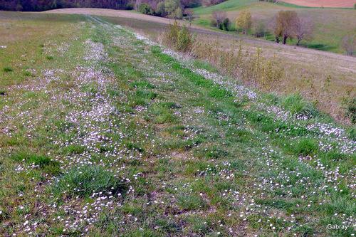 Randonnée: chemins de Pechbusque