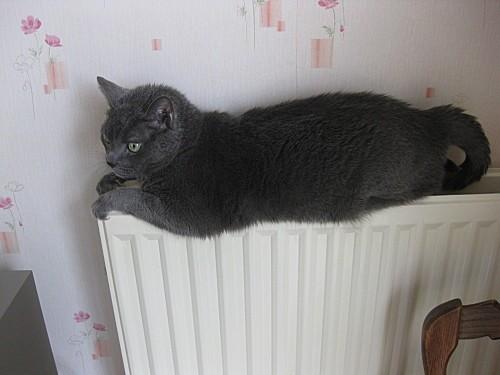 Mon-chat-et-les-autres 0028
