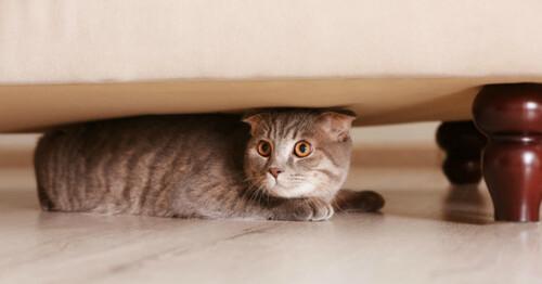 Pourquoi les chats se cachent-ils ?