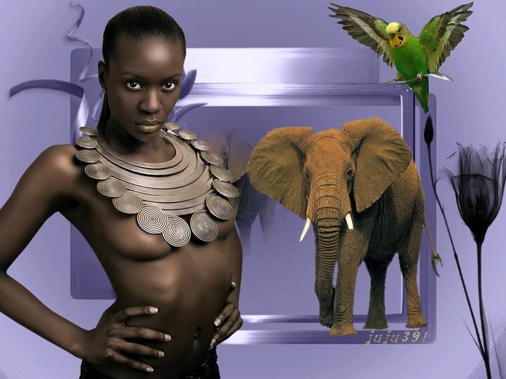 les Elephants !         10
