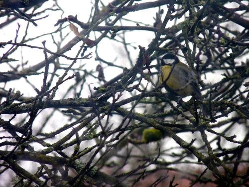 Comme un oiseau sur la branche...