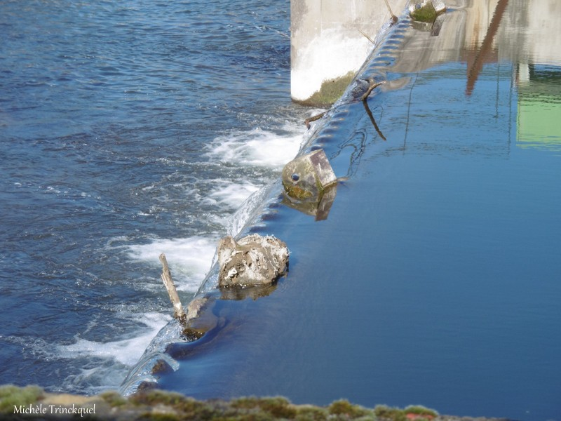 Une balade au Lac d'ORTHEZ (64), le 20 février (suite n° 2)....