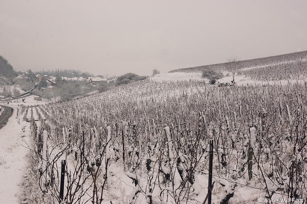 Neige sur la vigne. - 1
