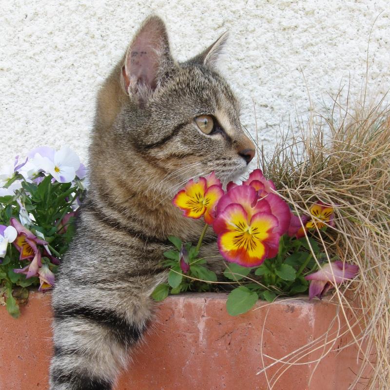 Dernier hommage pour une petite chat...