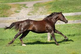 """Résultat de recherche d'images pour """"quarter horse galop"""""""