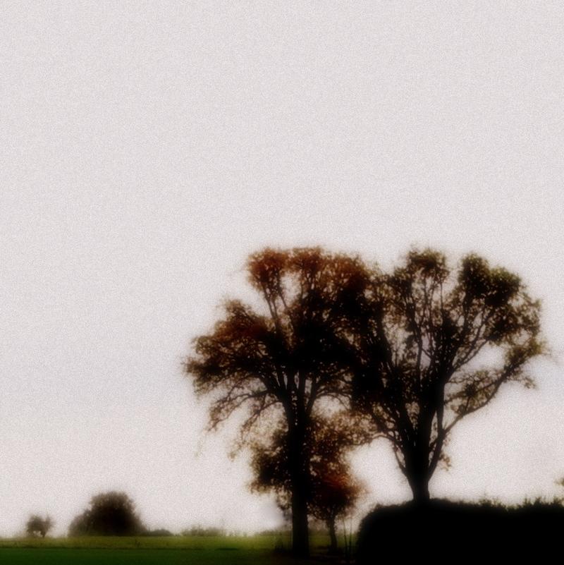 Deux arbres.