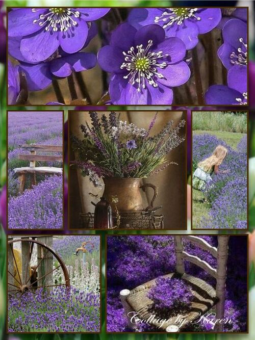 collages violets