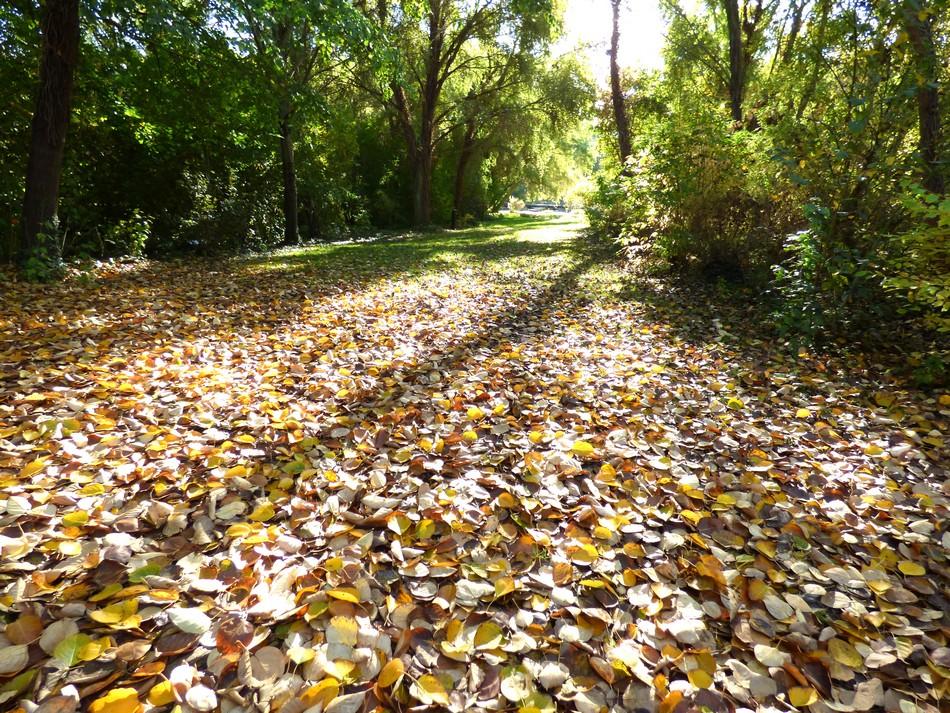Que voulez-vous, l'automne, j'aime.