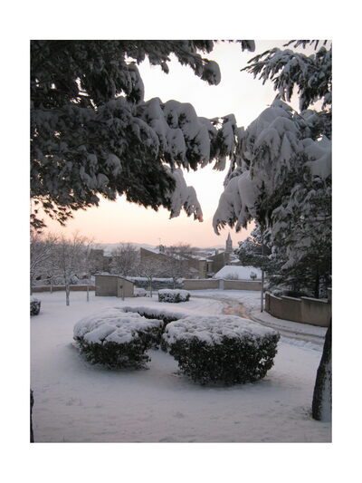 graines de partage du mois de janvier (neige / animaux domestiques)