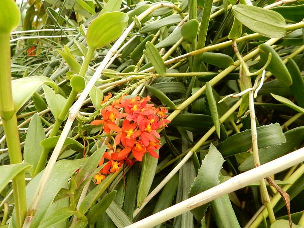 Les fleurs royales , fin de la visite des serres royales.