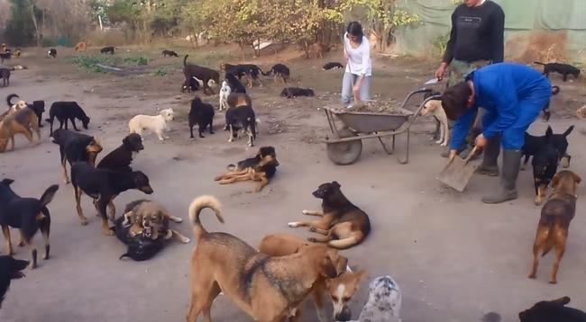 450 chiens ça coûte cher au Sanctuaire