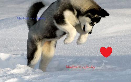 """Les chien favoris des """"créateurs"""" du blog"""