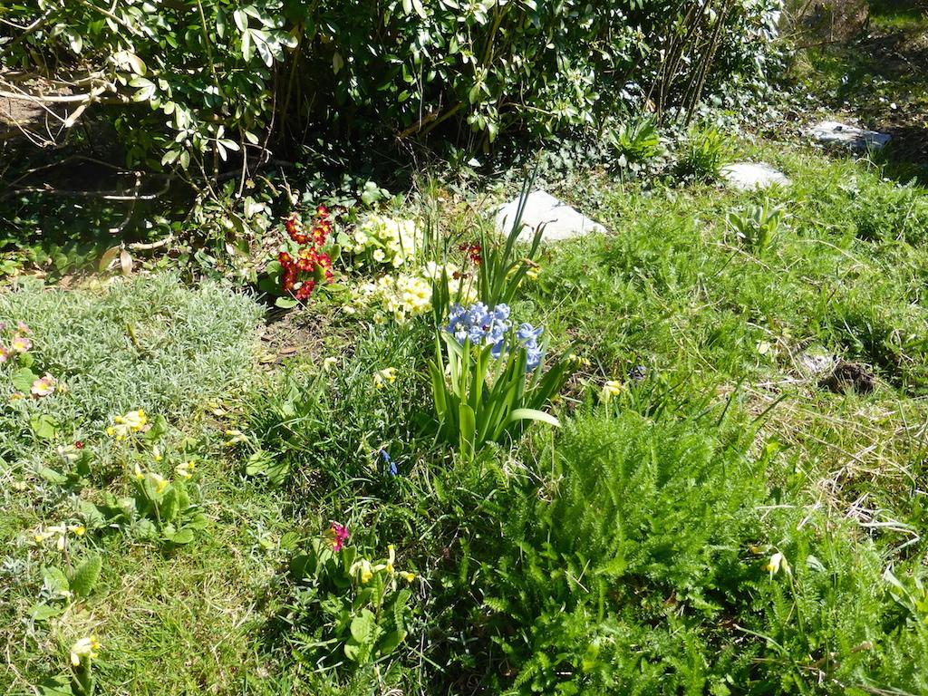 Des fleurs et encore des fleurs... au long des jours.