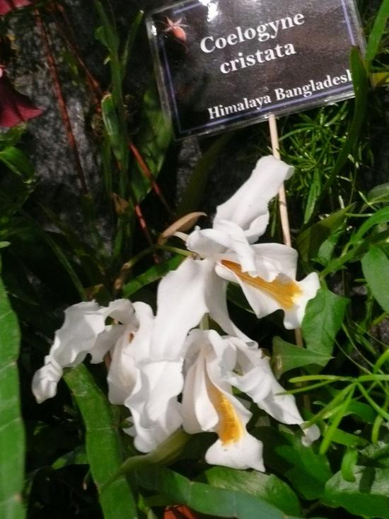 2013-Expo orchid Pont sainte Marie 058