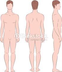 """Résultat de recherche d'images pour """"le corps humain dessin"""""""