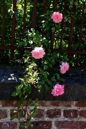 Lesdain, pays des fraises et des roses
