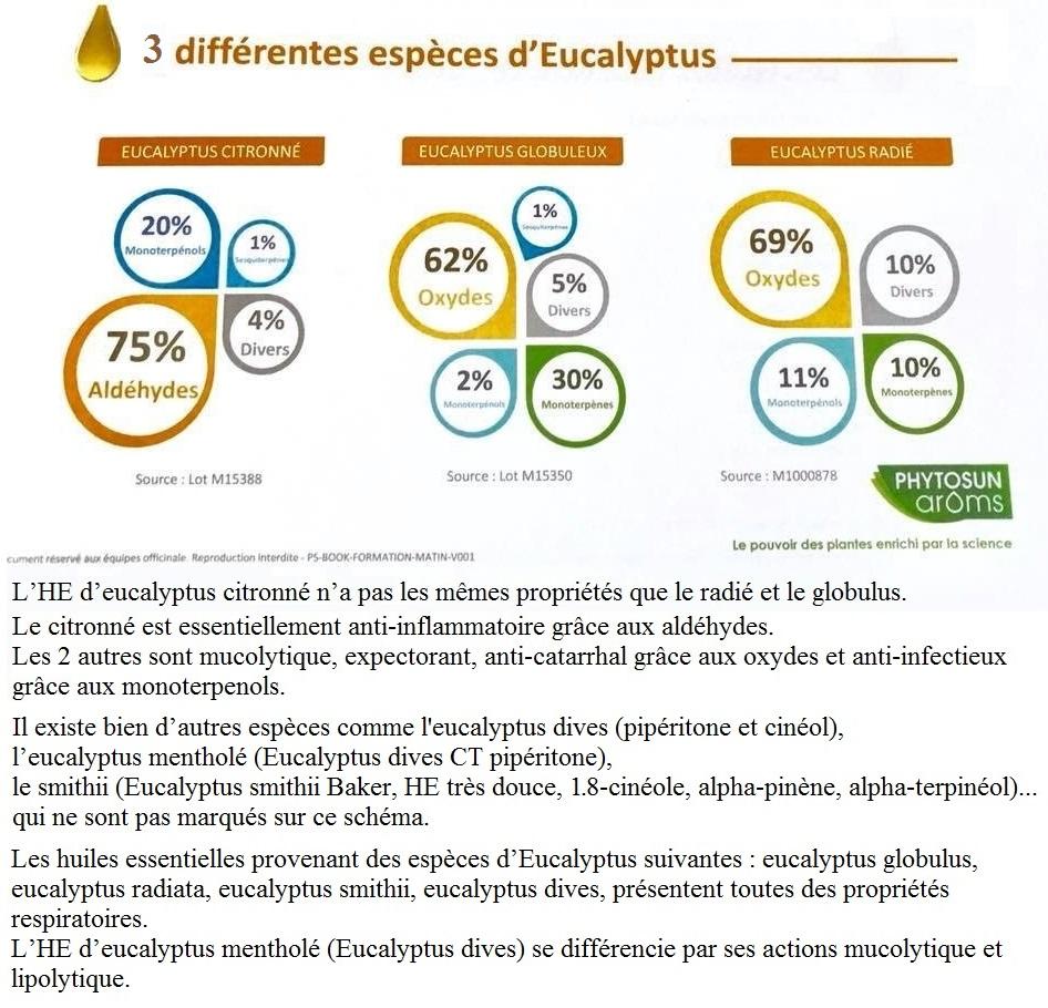 f.he Les eucalyptus