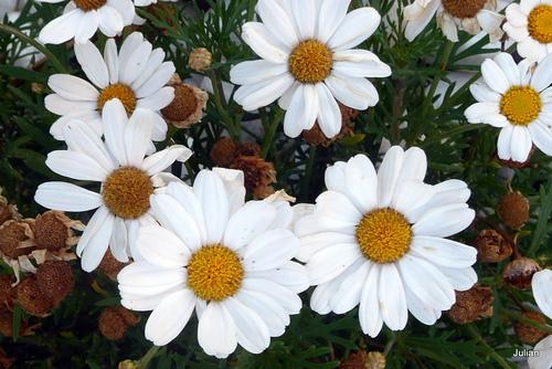 Des fleurs blanches !