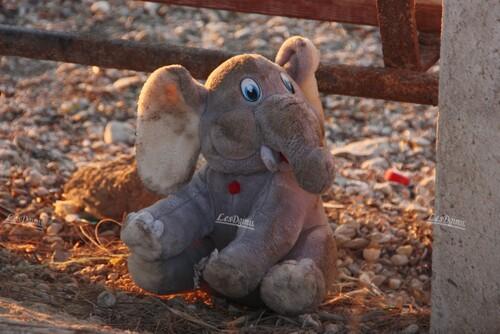 Sauvetage d'un élèphant