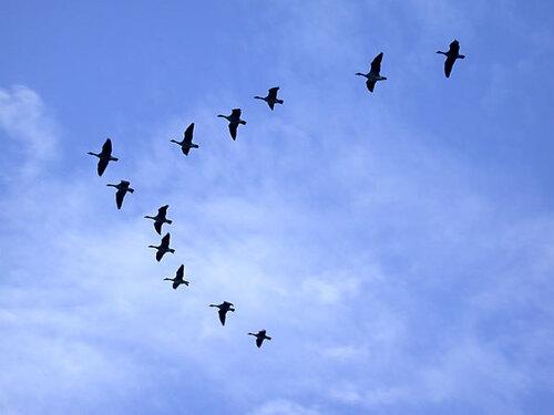 Les Oiseaux Migrateurs : Leur Combat Pour La Survie [HD]