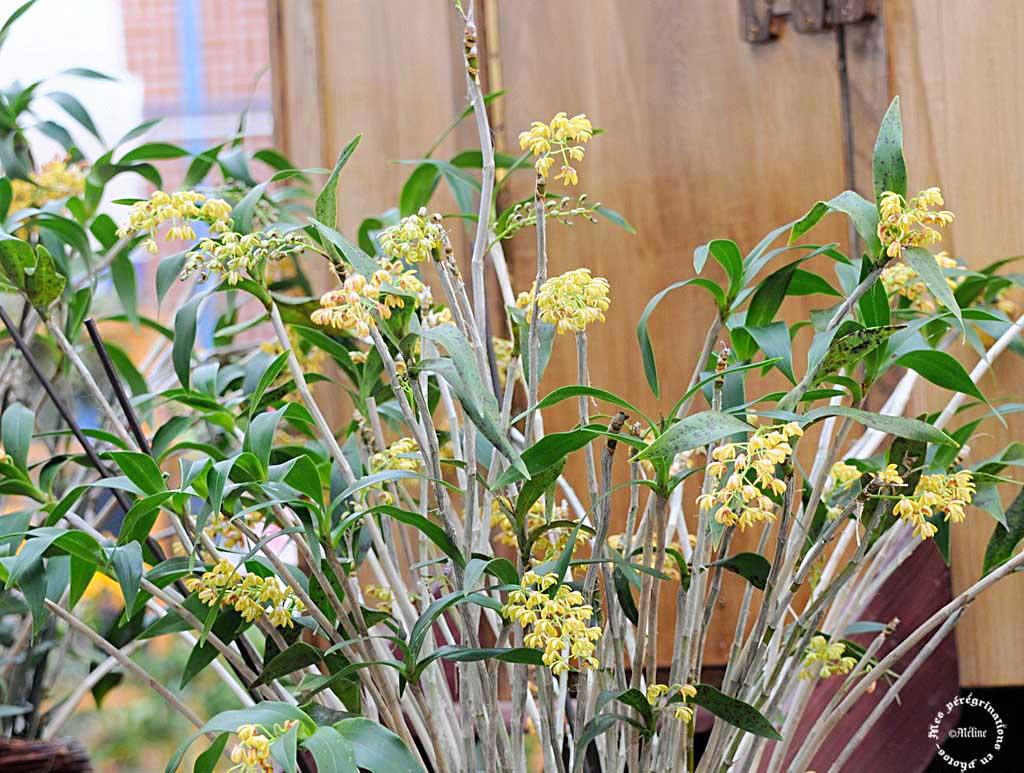Exposition d'orchidées à Annequin (4)