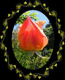 Balade au Jardin et Jardiner avec la Lune du 21 au 31 Mai