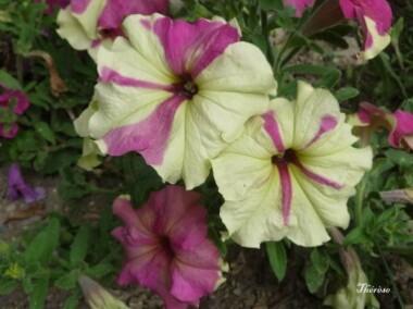 Fleurs d'automne (39)