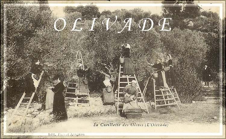Le grand Almanach de la France : L'olivade