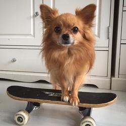 Inky le skateur