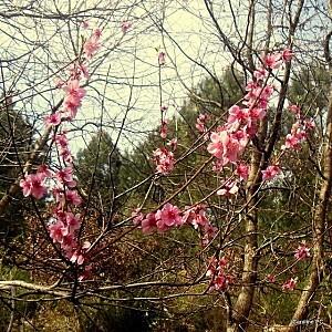 fleurs-et-foret-026.jpg
