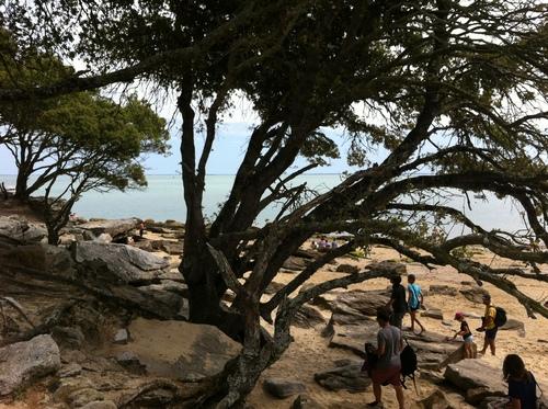 Noirmoutier : paysages dont je ne me lasse pas, mais qui peuvent lasser les autres