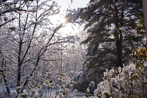 Un réveil dans la neige