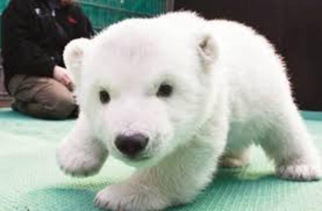 """Résultat de recherche d'images pour """"des animaux trop cute"""""""