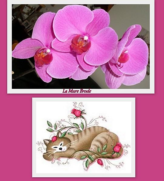 2012-07-08-Broderie-Digoin---orchidee1.jpg