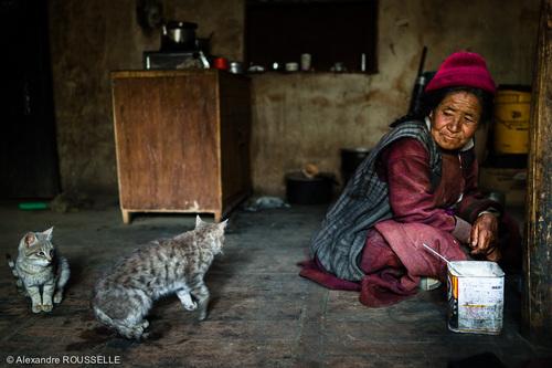 07 - Des chats, des hommes,des femmes, des enfants en couleurs