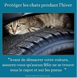 Y a-t-il un chat caché sous votre voiture en hiver ?