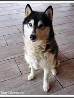 Laska (3,5 ans)