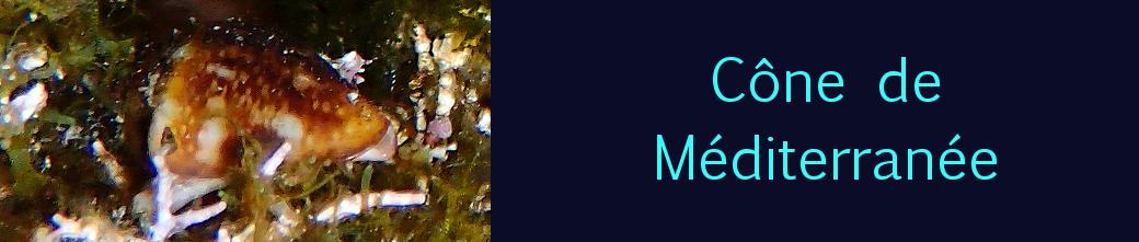 cône de Méditerranée