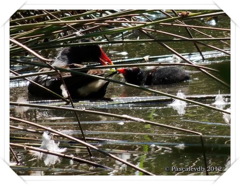 Visite aux oiseaux du Teich - 2/12