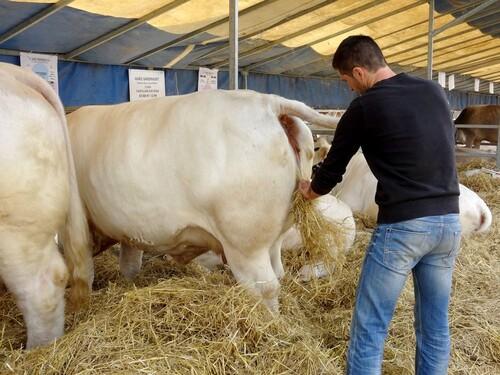La fête de l'agriculture a eu lieu à Châtillon sur Seine...