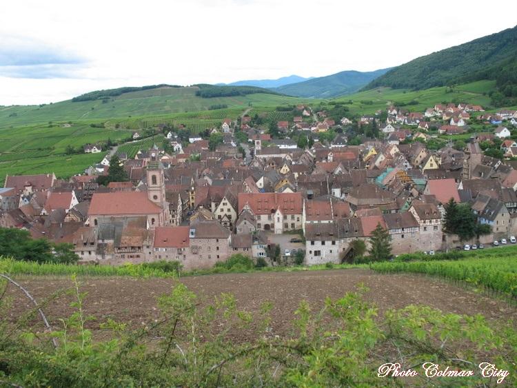 Riquewihr (68) : Balade au Schoenberg 1/2