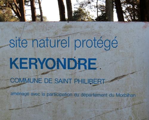 Les arbres et m'océan à Saint Philibert (Morbihan)