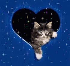 """Résultat de recherche d'images pour """"gif chat avec des coeur"""""""