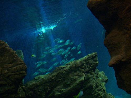 aquarium-piratesvernis-091.JPG