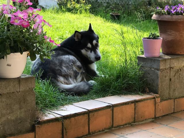 (-*♥*-) Un chien abandonné vient vers lui avec un morceaux pain. . . lorsqu'il découvre la vérité il est sans mots!
