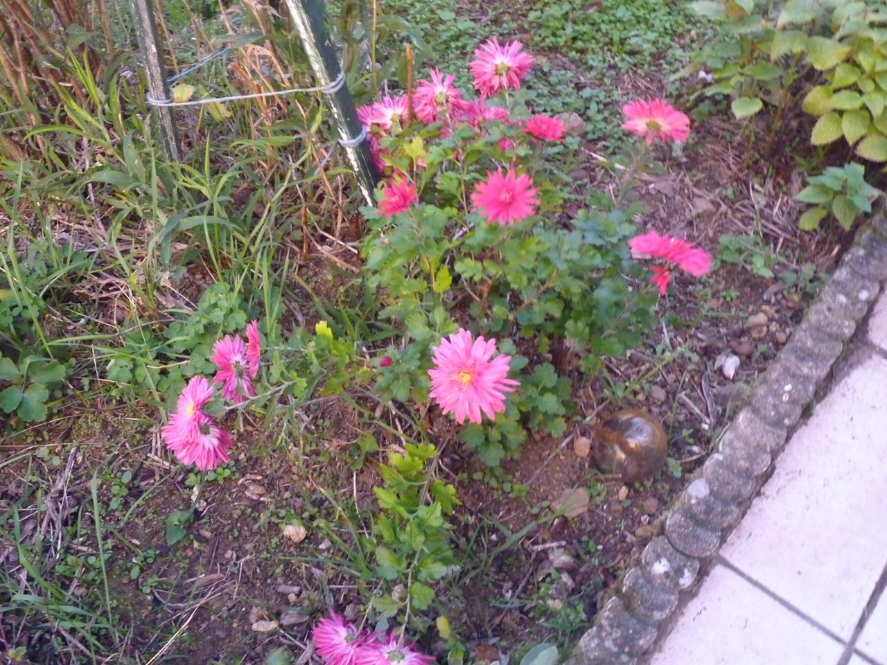 mon jardin en automne